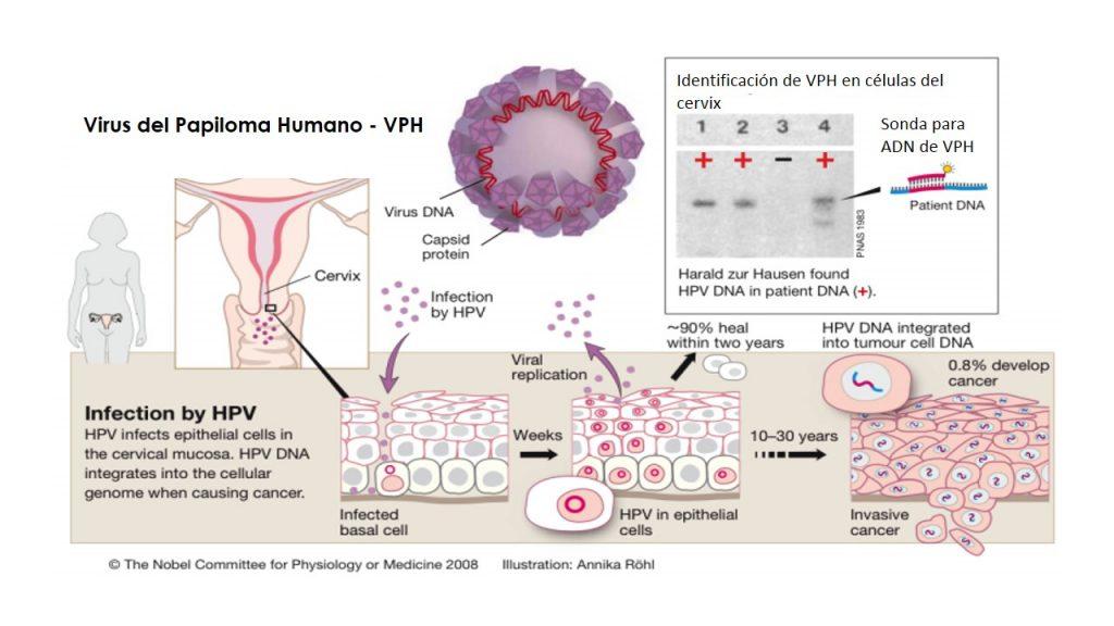 hpv és tumor