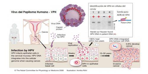 VPH genolife