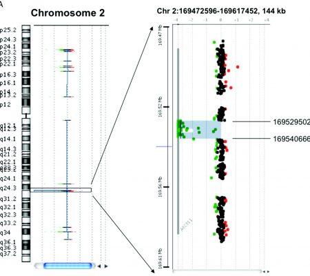 Cariotipo Molecular Diagnostico Genético